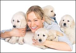Hundeversicherung devk